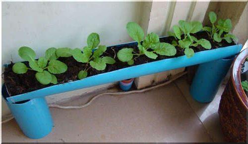 Мини огород в квартире