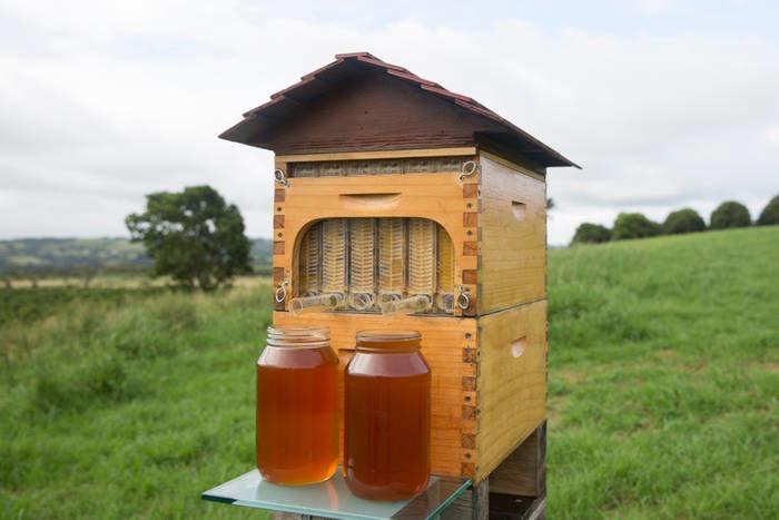 flow-bee-hive-1-7440757-3562532